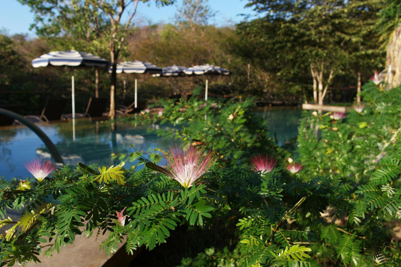 Flowers blooming near pool in Rio Perdido, Tenorio