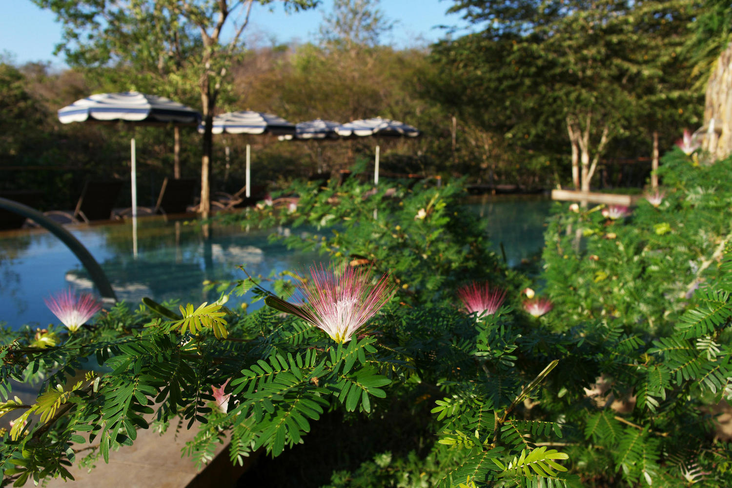 Flowers blooming near pool in Rio Perdido, Tenorio