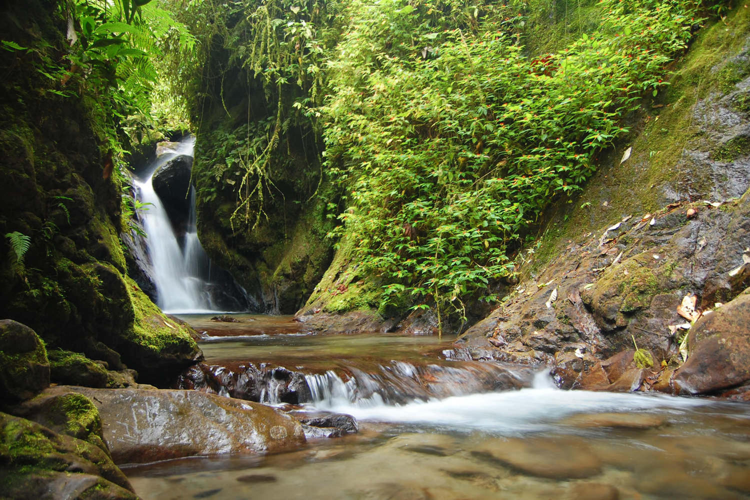 Natural spring waterfall in Ecuador's cloud forest