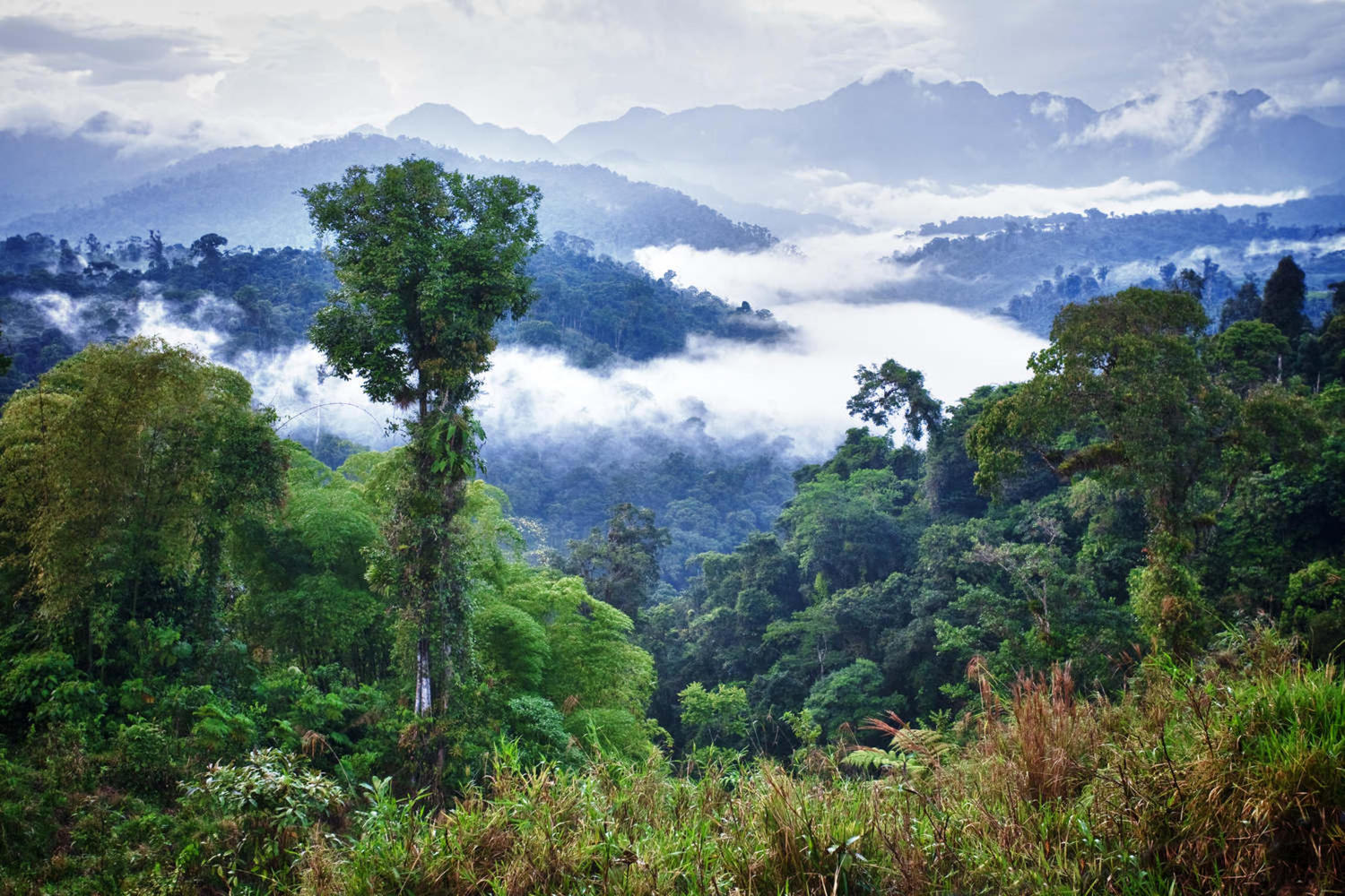 Beautiful panorama of the cloud forest in Ecuador