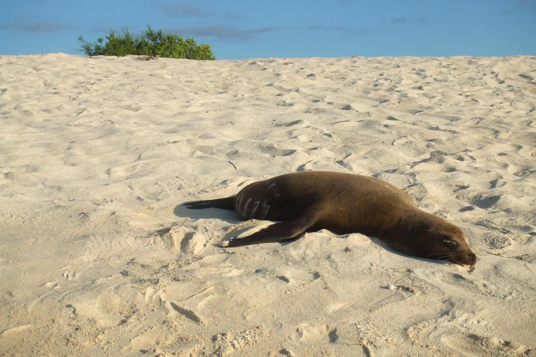 Sea lion asleep on the beach