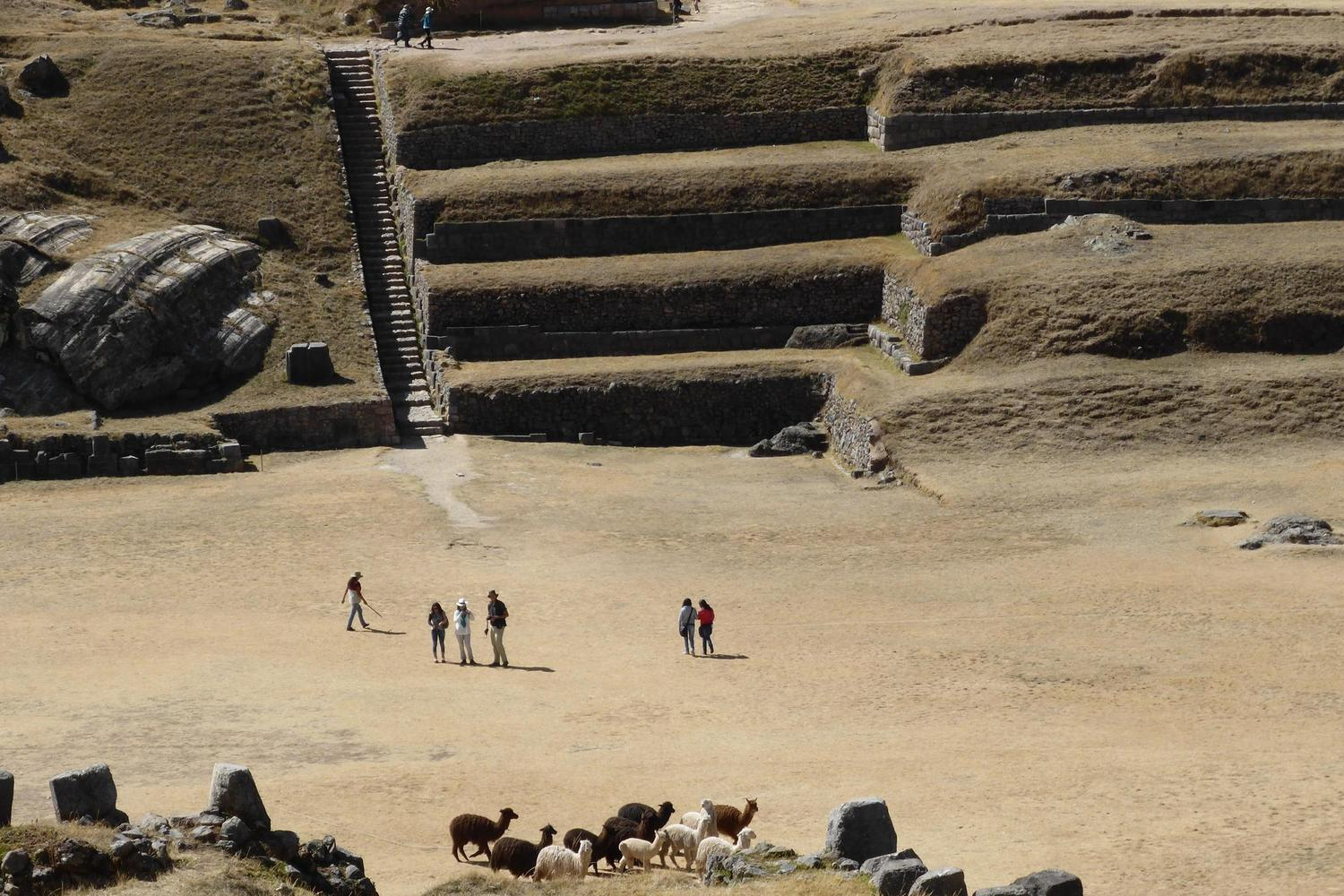 Llamas grazing in the Incan ruins of Sacsayhuaman near Cusco