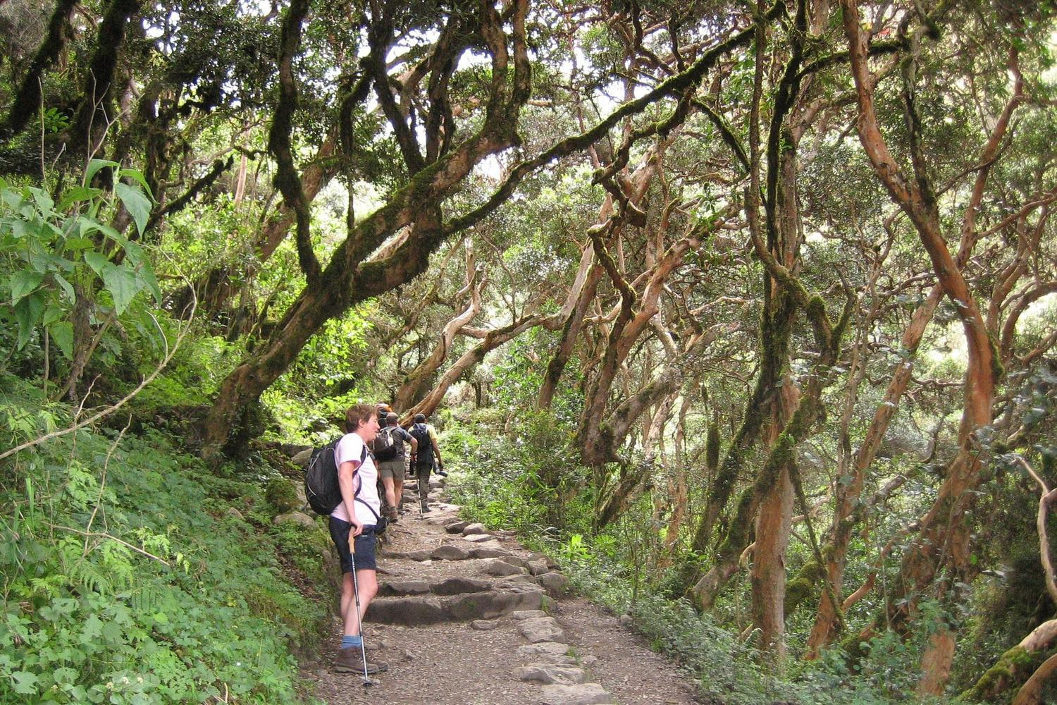 The early stages of the Inca Trail to Machu Picchu