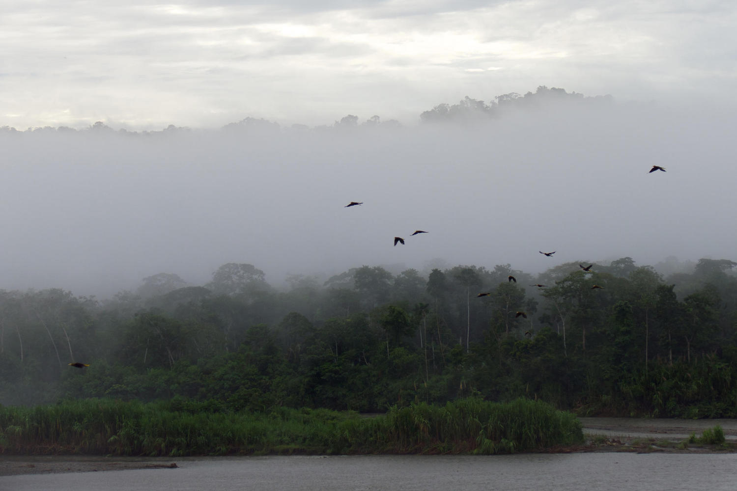 Birds in flight at dawn over the River Alto Madre de Dios