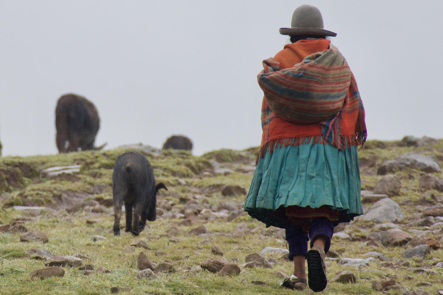 Shepherdess walking in the highlands of the Sacred Valley
