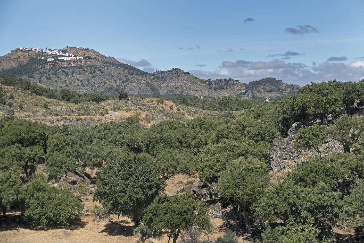 Cork trees arrayed in the foothills below Marvao