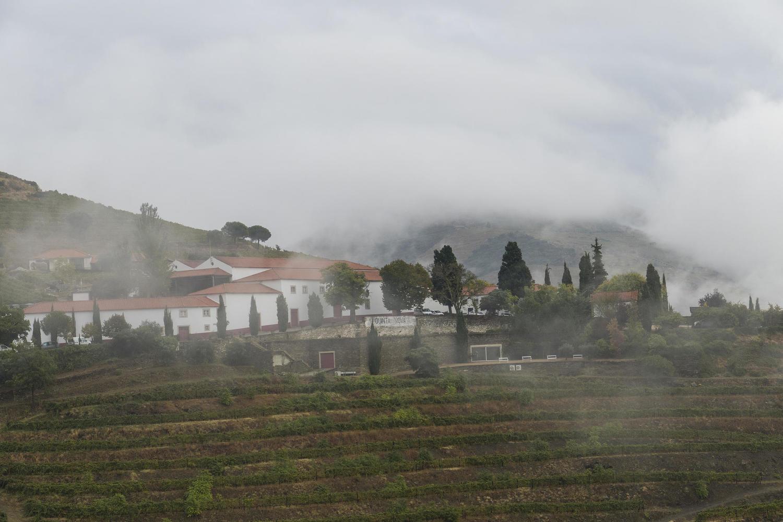 Mist over the Quinta Nova