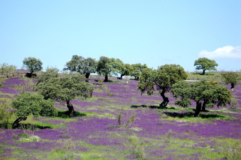 Picture perfect 'dehesa' landscape, unique to Andalucia
