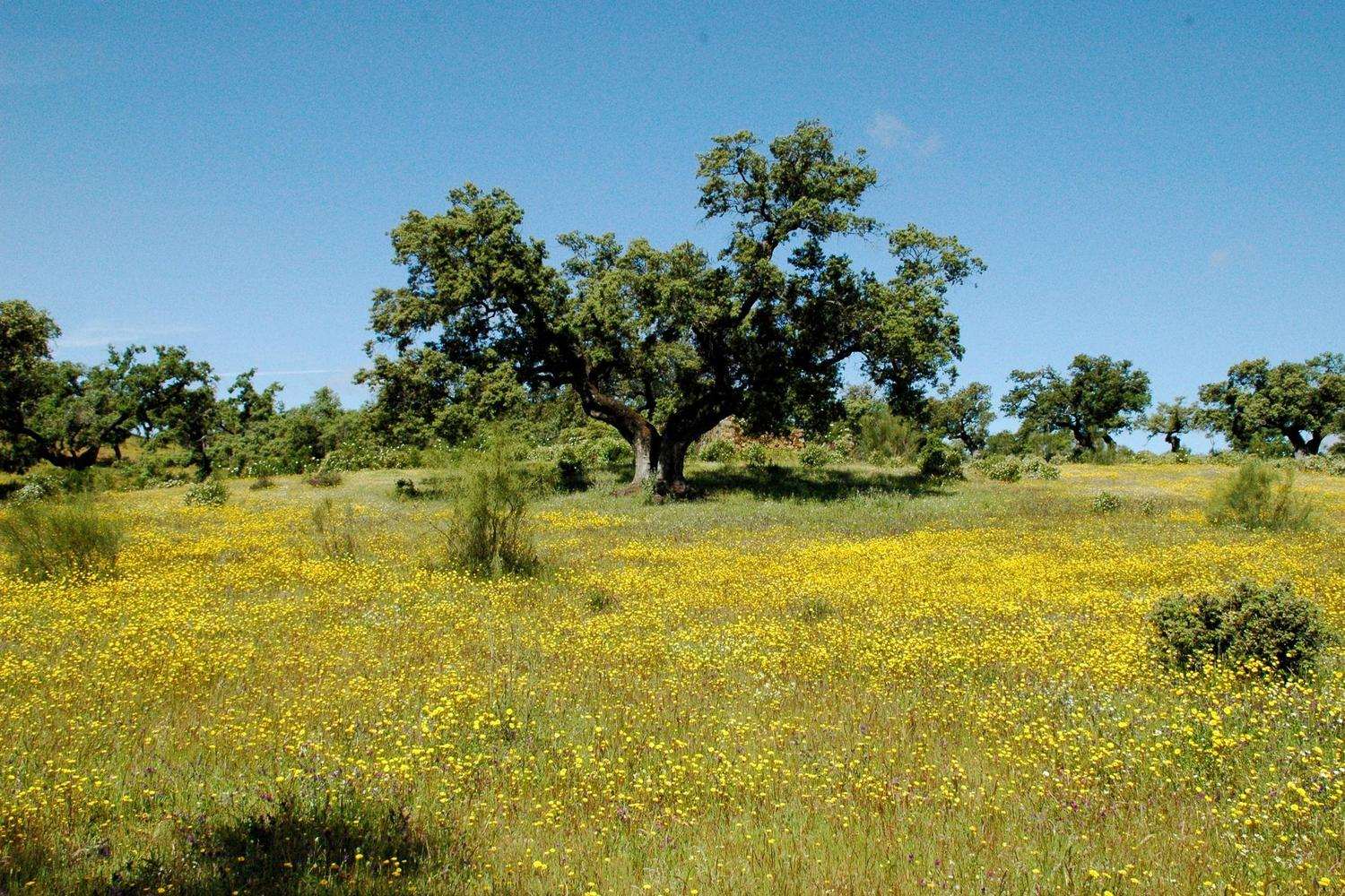 The flower filled meadows of spring in Andalucia