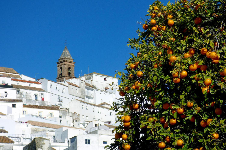Oranges and white walls in Alcalá de los Gazules, Cadiz