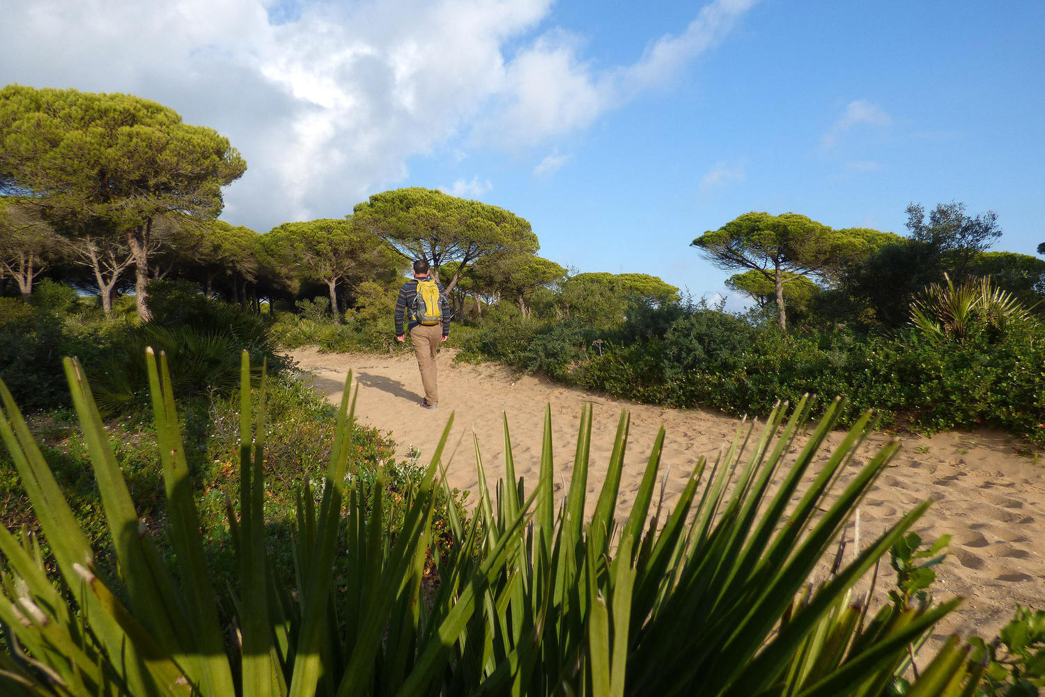 Hiking in the pine forest of Las Breñas Natural Park in Barbate
