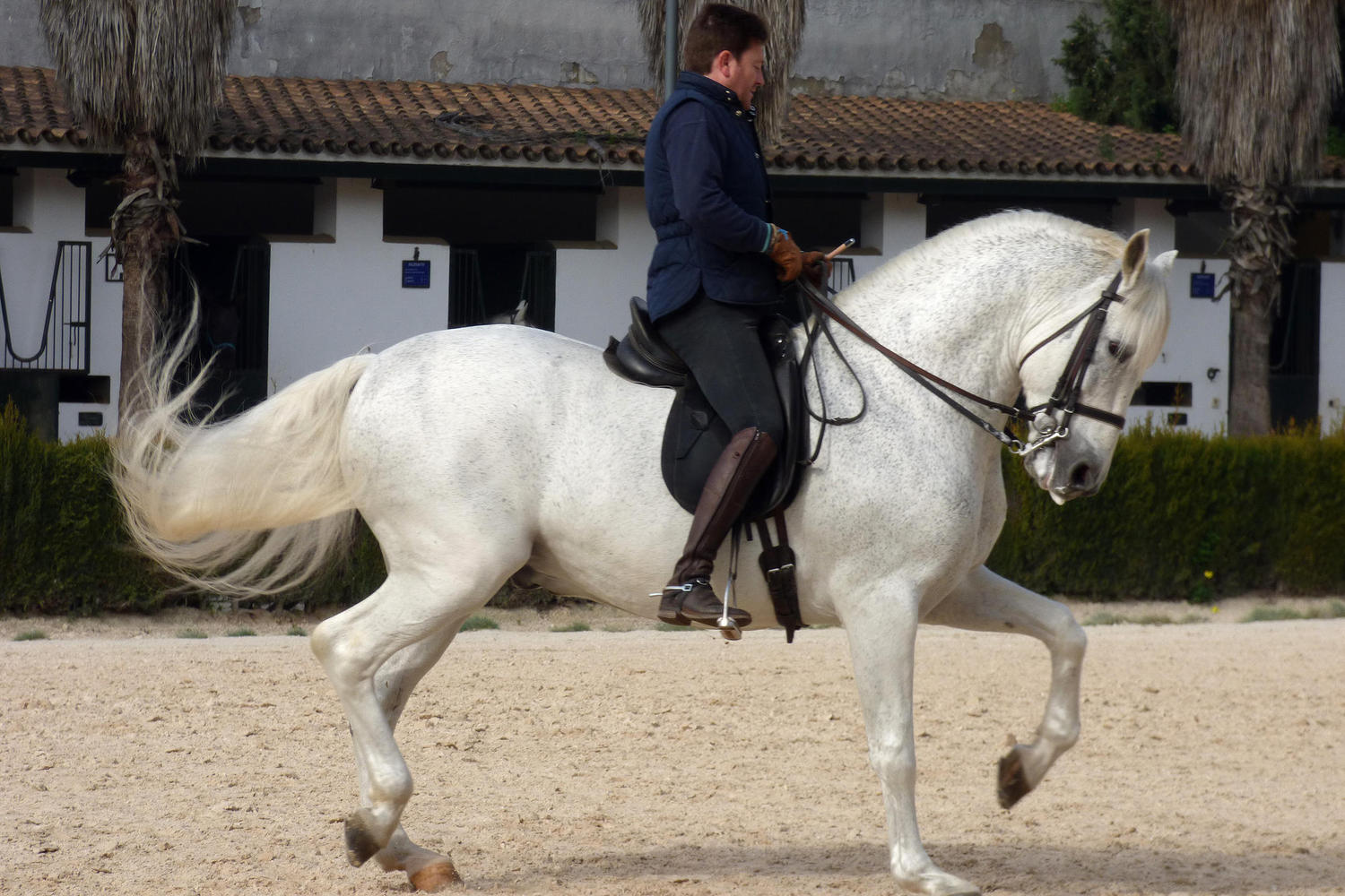 horse school in Jerez