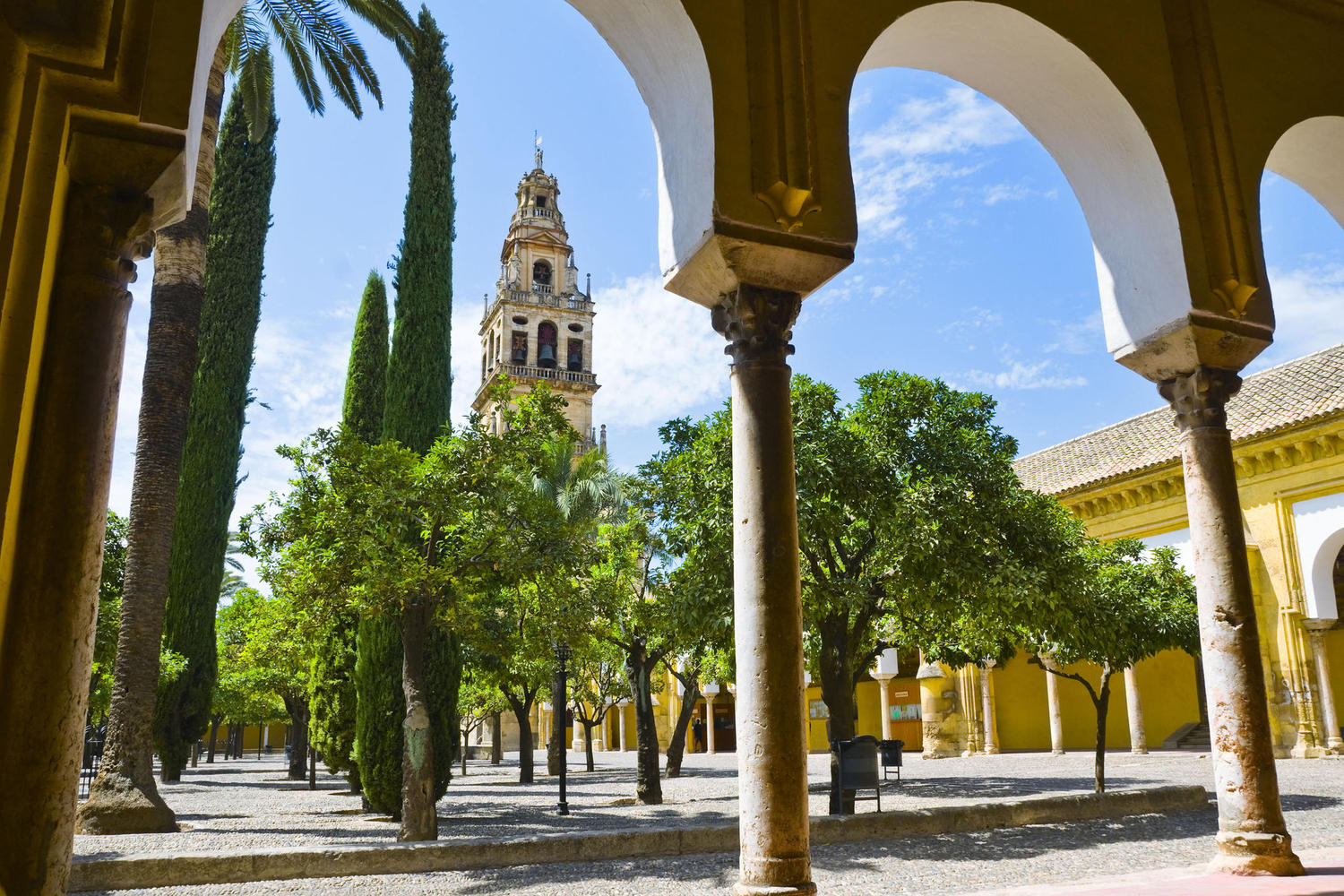 Orange trees in the couryard of the Córdoba mosque.