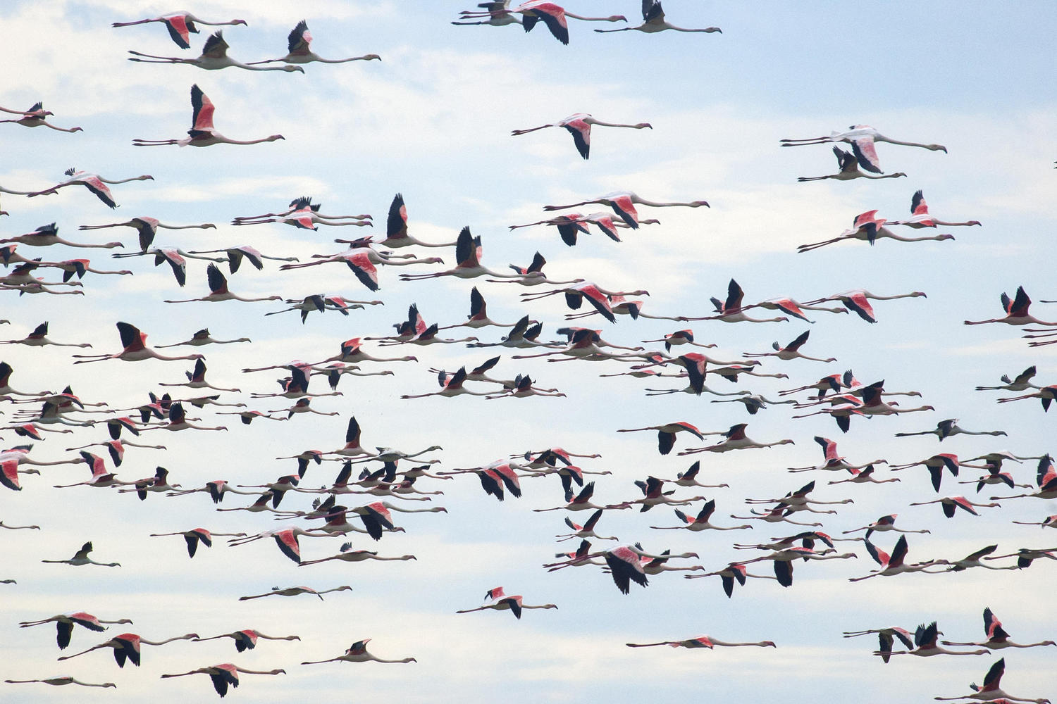 flamingo colony at Doñana