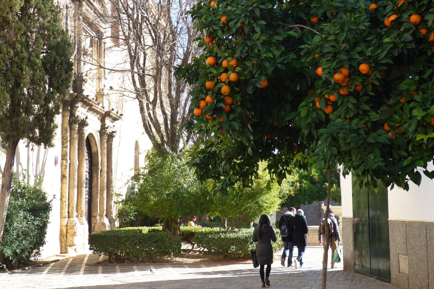 Walking home from the market in Seville