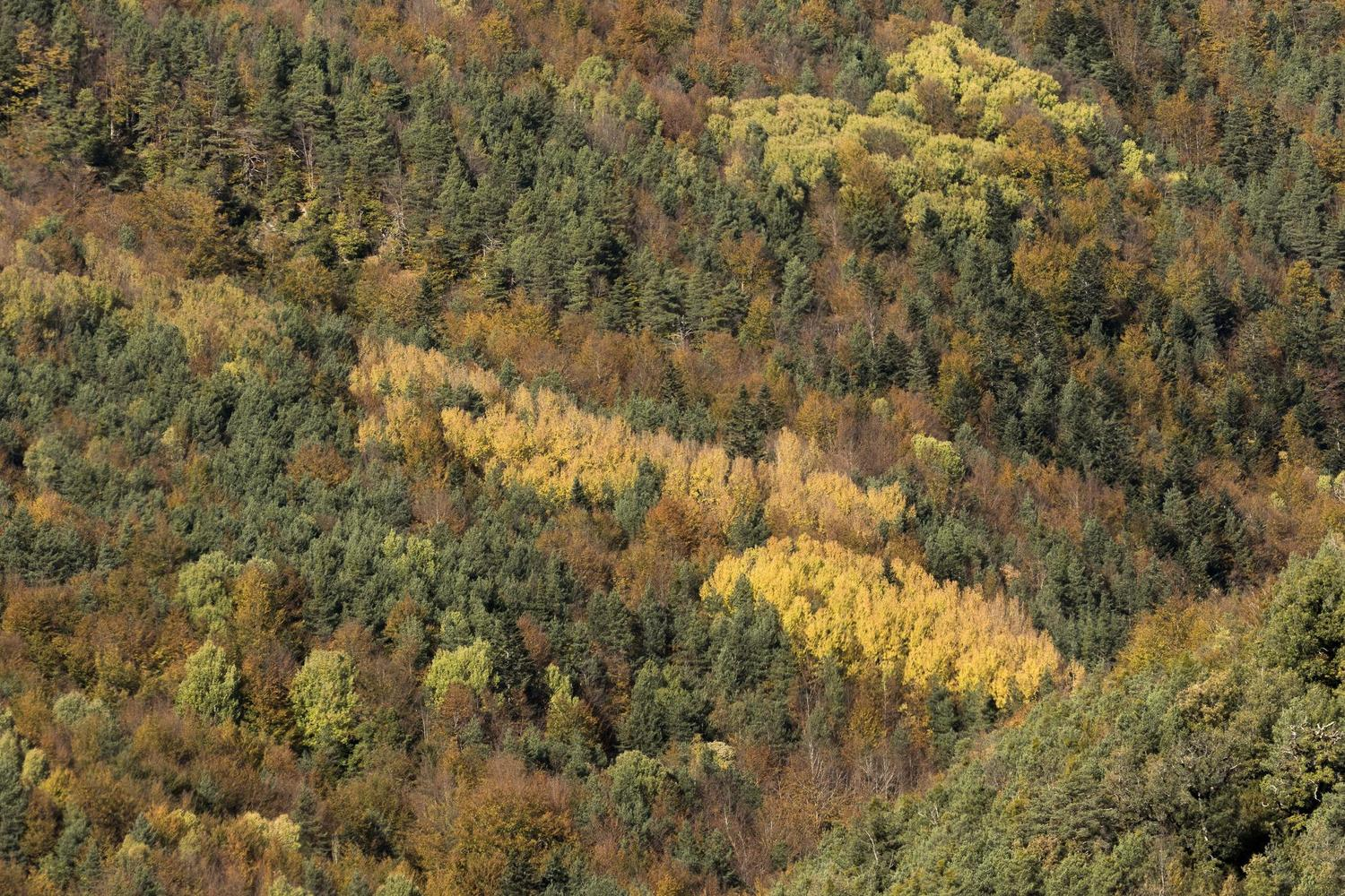 Autumn colours in the foothills of Monte Perdido