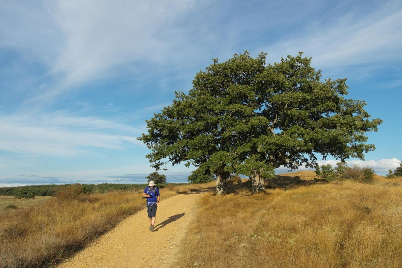 Walking the Camino de Santiago between San Juan de Ortega and Atapuerca