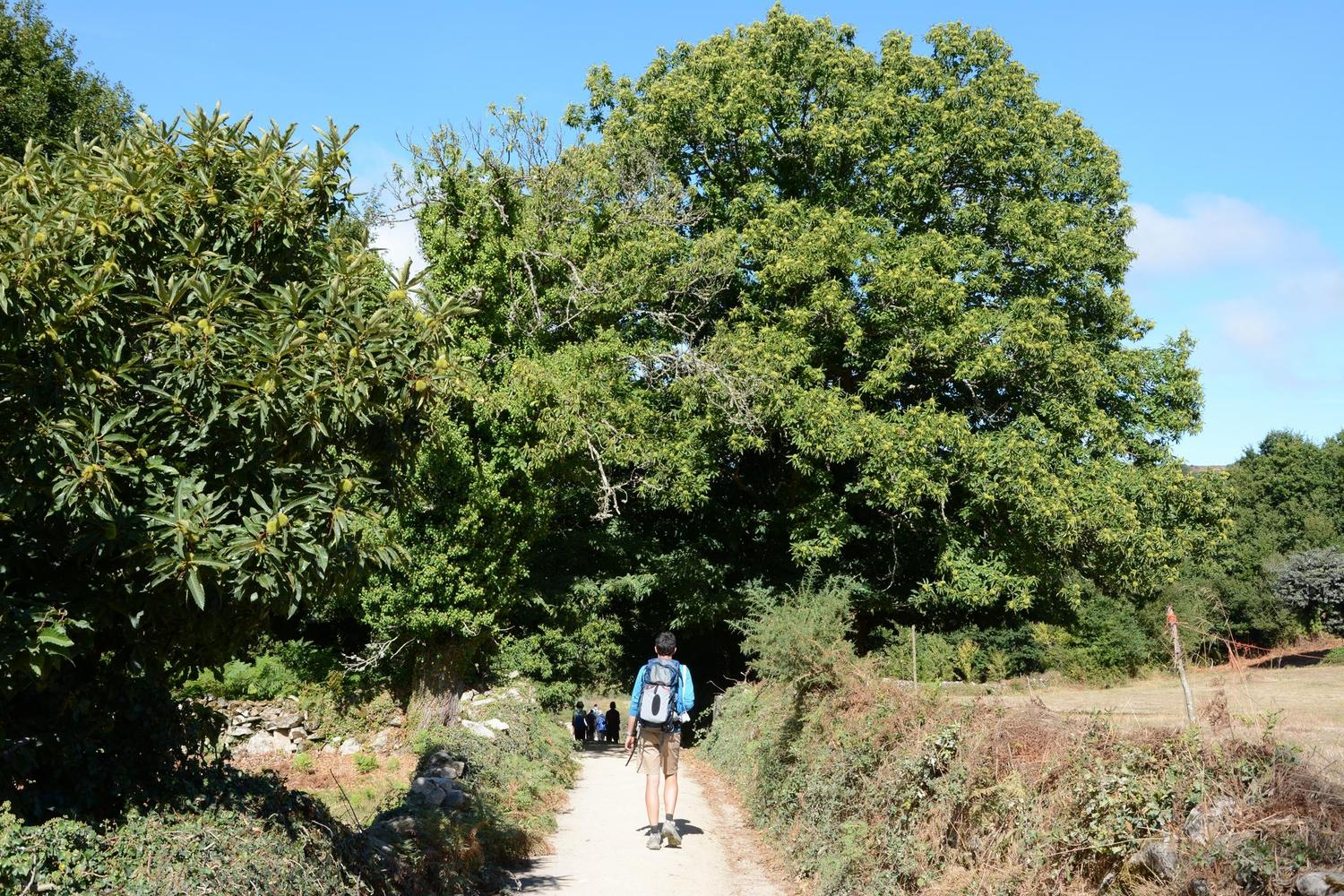The last 100km of the Camino de Santiago