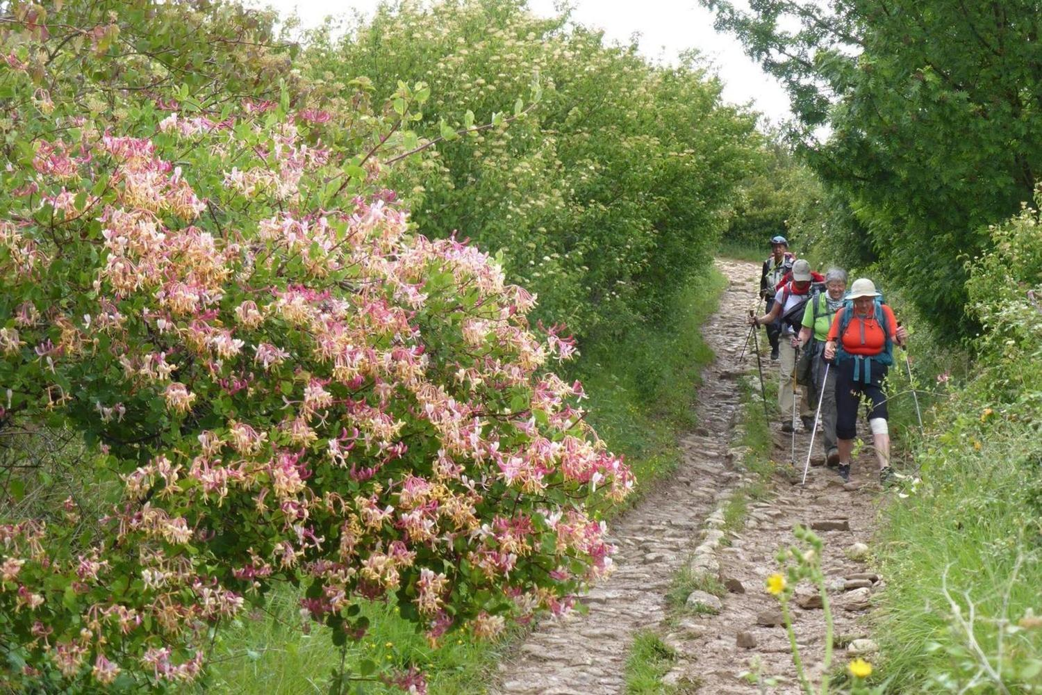 Walking past fresh spring flowers on the Camino from Cirauqui to Estella