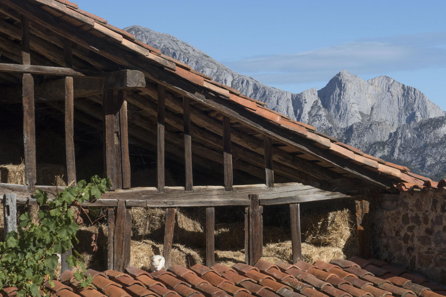 Lazy cat in Liebana with the Agero peak in the background