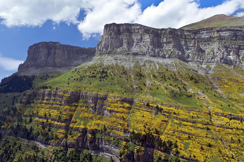 Summer flowers in the slopes of Ordesa.