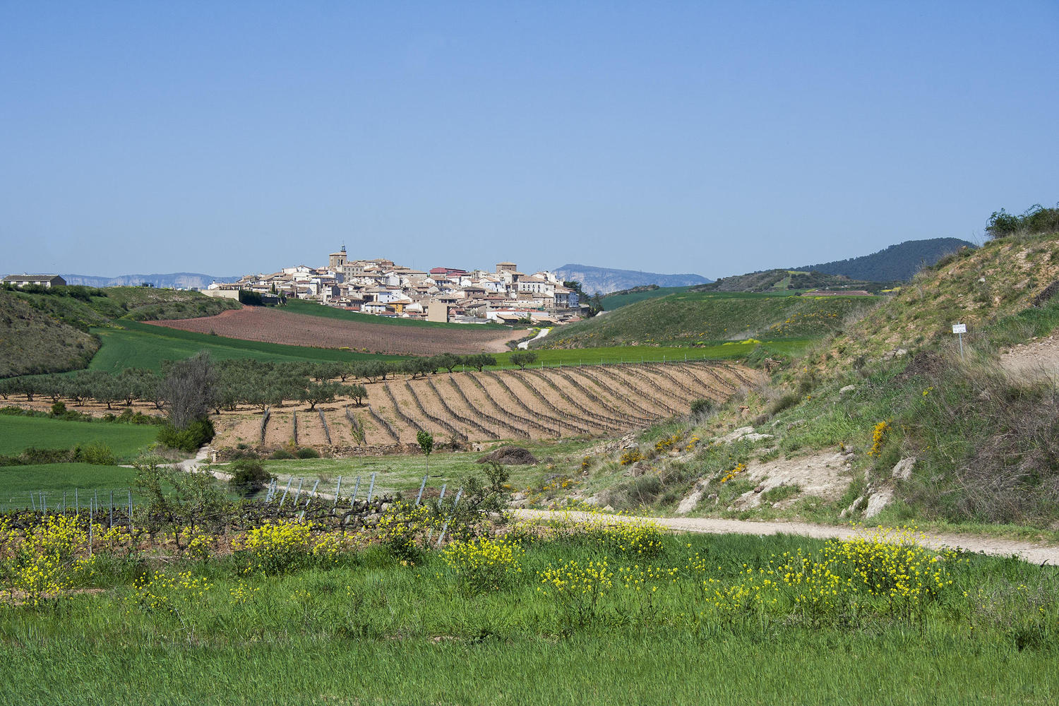The hilltop village of Cirauqui in the horizon.