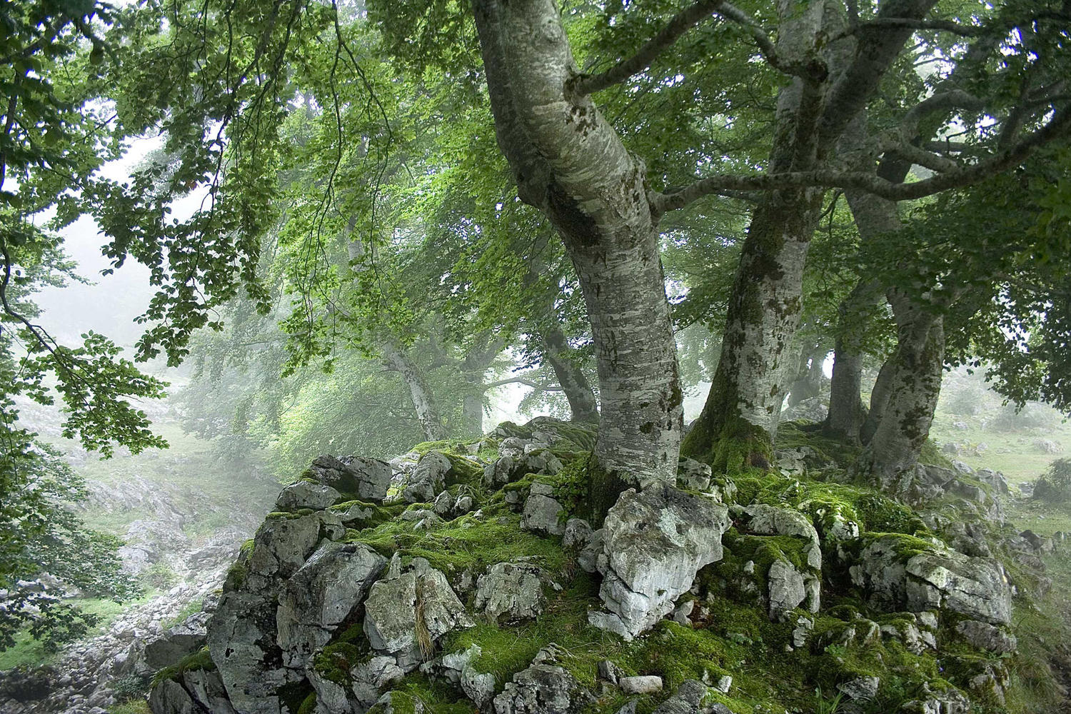 Magical forests in the mist.