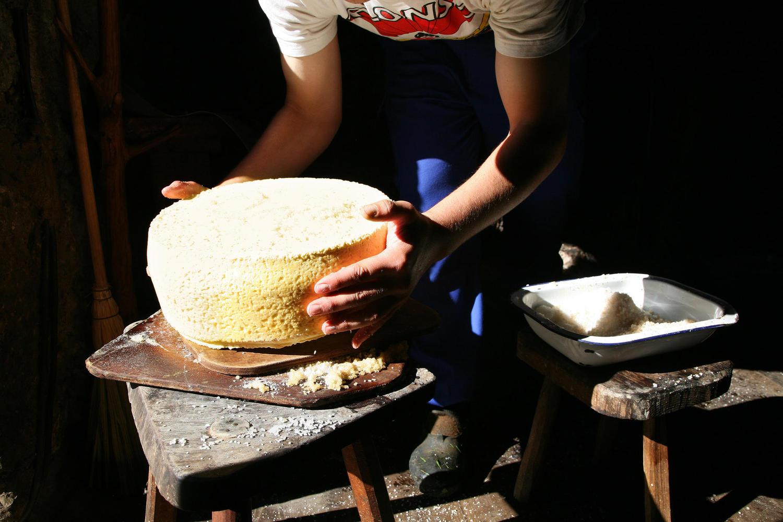 Shepherd of the Picos de Europa salting Gamoneu cheese