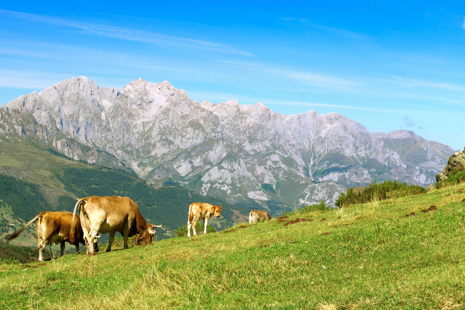 High pastures of Liebana with the Picos on the background.