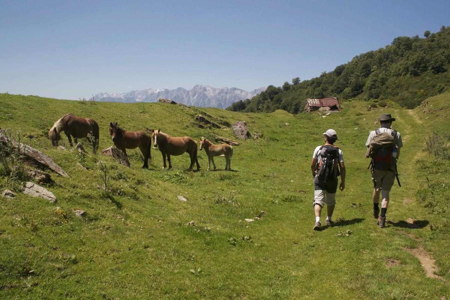 Walking across the high pastures of the Picos de Europa National Park in northern Spain