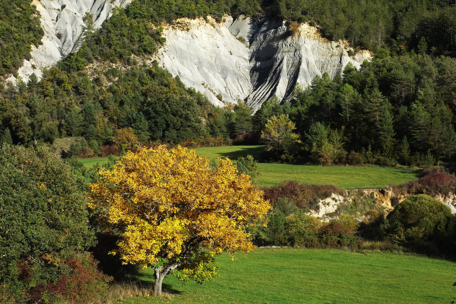 Fall colours in the Sobrarbe, foothills of the Pyrenees.