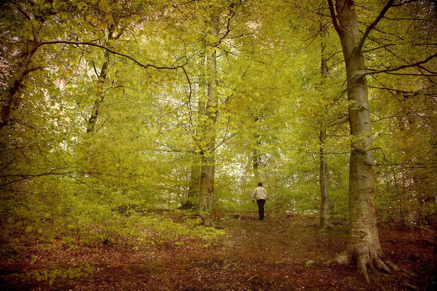 The beautiful beech forests of Northern Spain