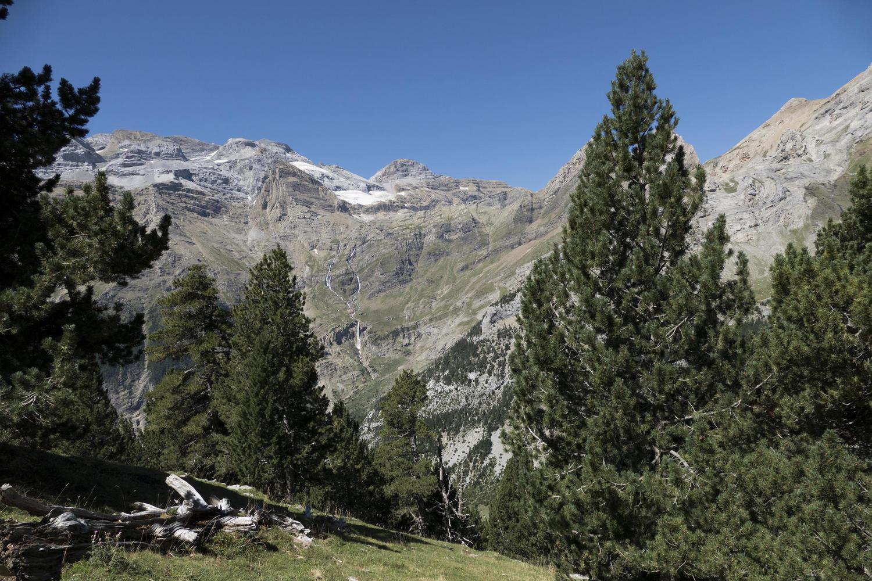 Black pines against the Monteperdido glacier