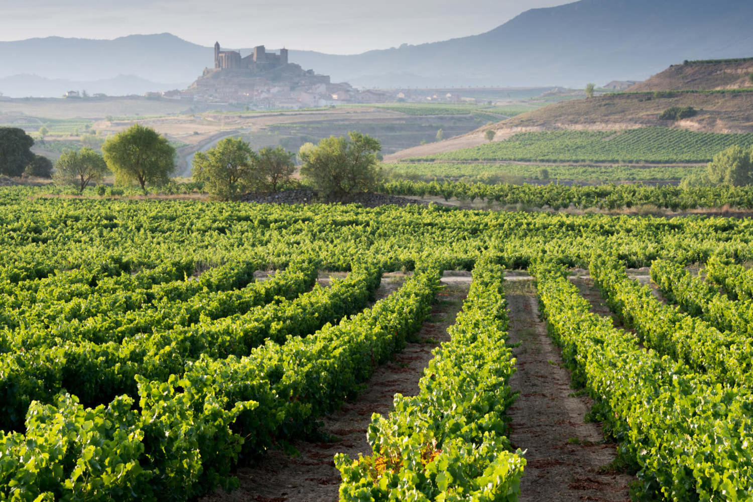 Vineyard and San Vicente de la Sonsierra as background