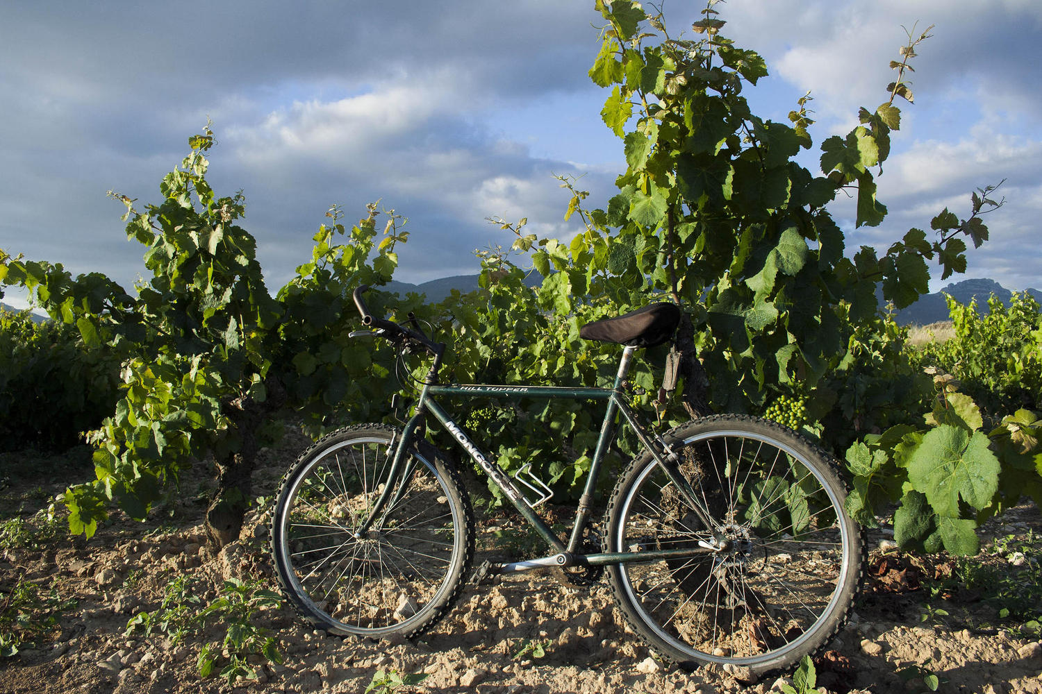 Cycling is a great way to explore the Rioja region.