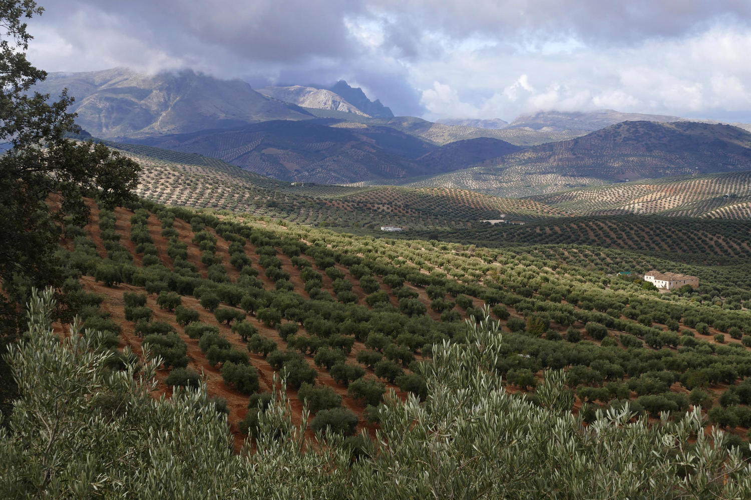 Olive groves and dramatic mountains are a winning combination near Almedinilla