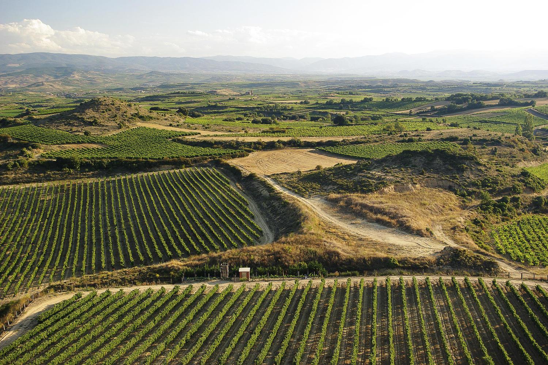 Riojan vineyards around Laguardia in the early morning light