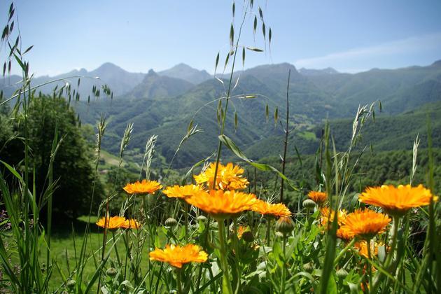 Spain picos de europa near tollo