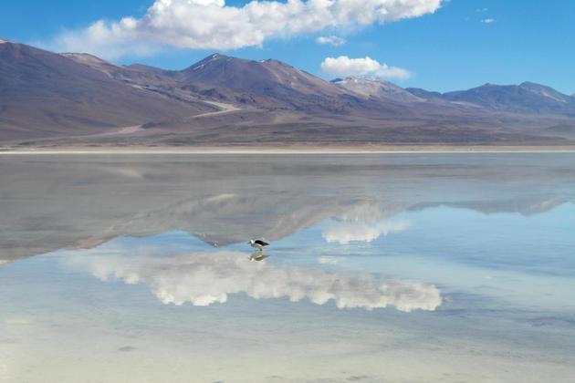 Bolivia altiplano laguna blanca bird reflected in water20180829 76980 18q426v