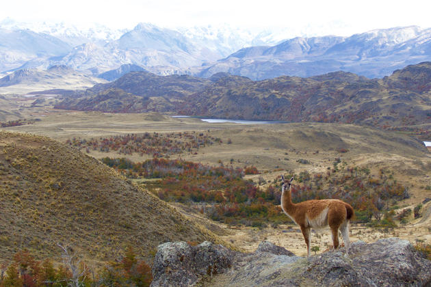 Chile patagonia carretera austral future parque patagonia guanaco valle chacabuco flipped