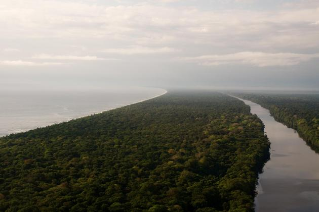 Costa rica tortuguero aerial view of waterways