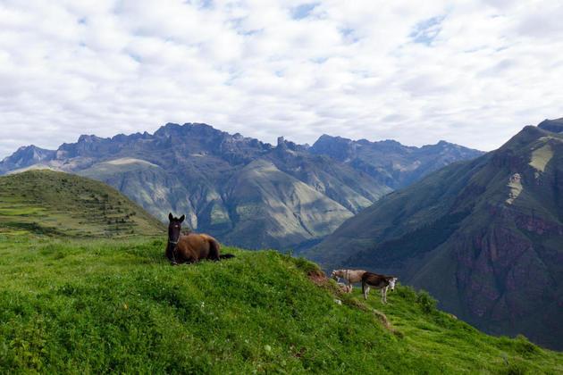 Peru cusco huchuy camp horses20180829 76980 1h7xlr5