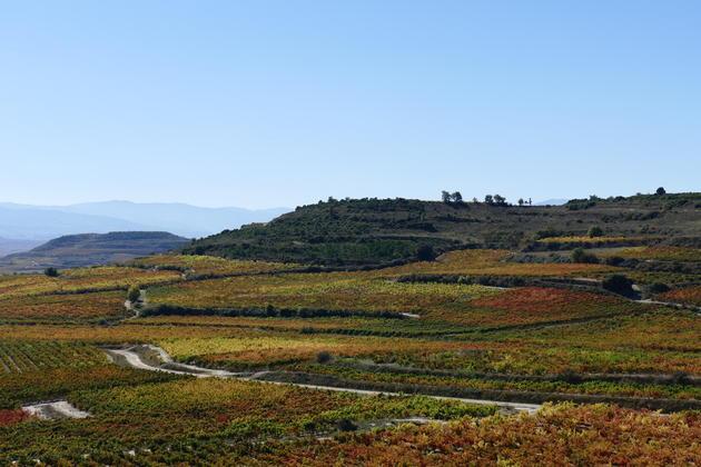 Spain basque country la rioja vineyards behind baigorri