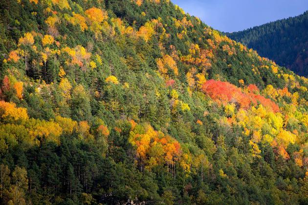 Spain huesca pyrenees ordesa forest autumn c lunamarina