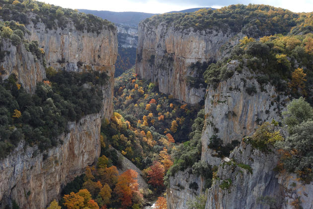 Spain navarre pyrenees foz de arbayun autumn leaves
