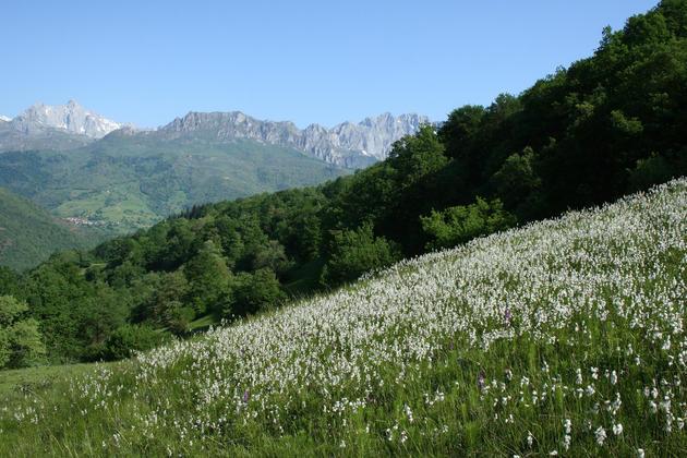 Spain picos de europa liebana spring meadows c dmartin