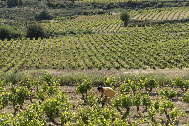 Spain rioja villabuena luis ca%c3%b1as winery vineyards worker c dmartin
