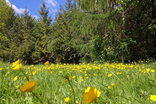 Spring meadow hertfordshire chris