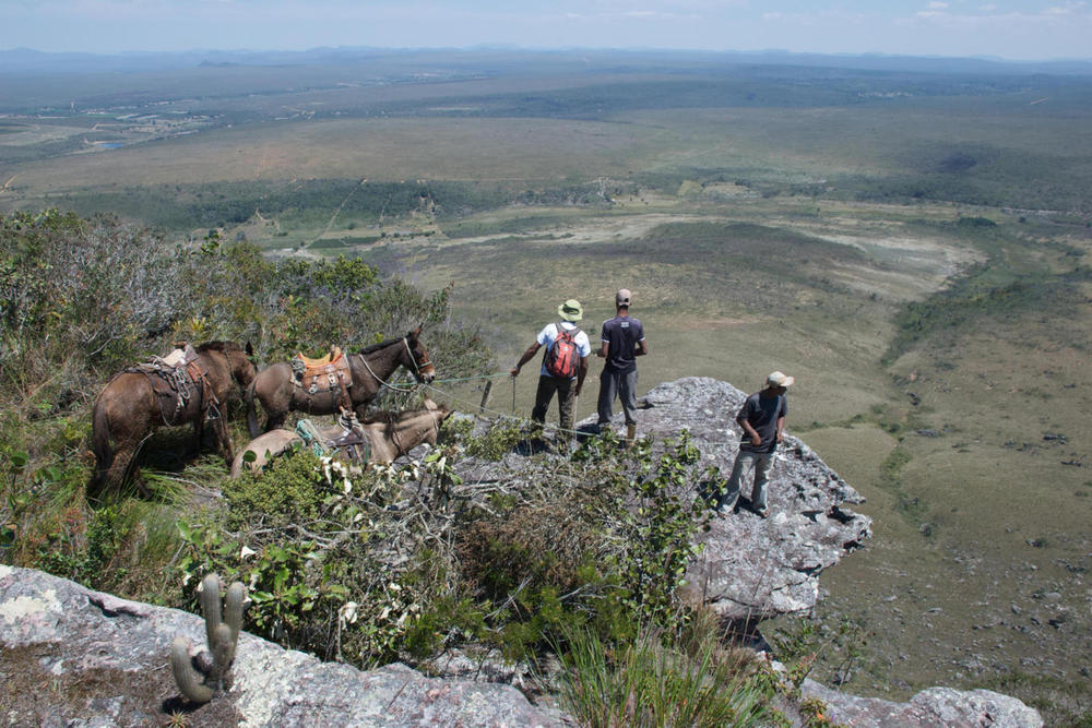 Brazil bahia chapada diamantina muleteers looking for mule20180829 76980 sgm30l