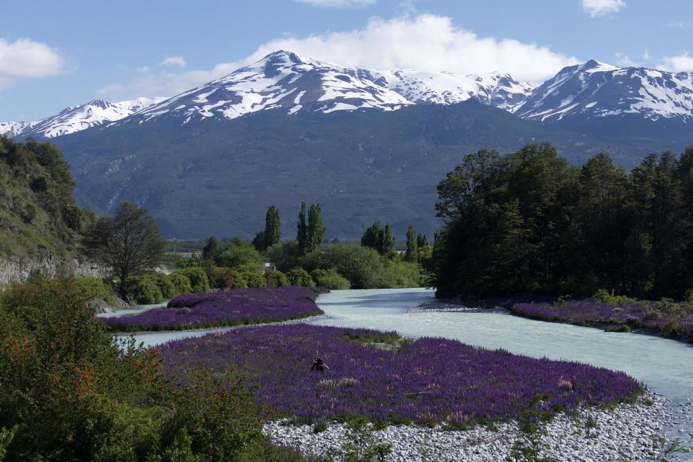Chile patagonia carretera austral spring flowers